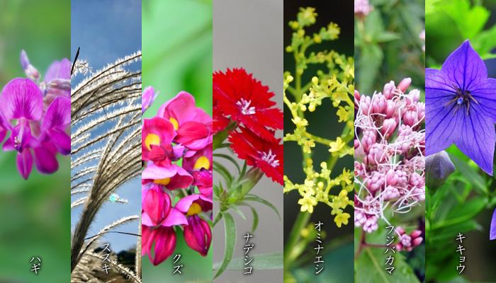 キキョウを含む秋の七草の各画像。
